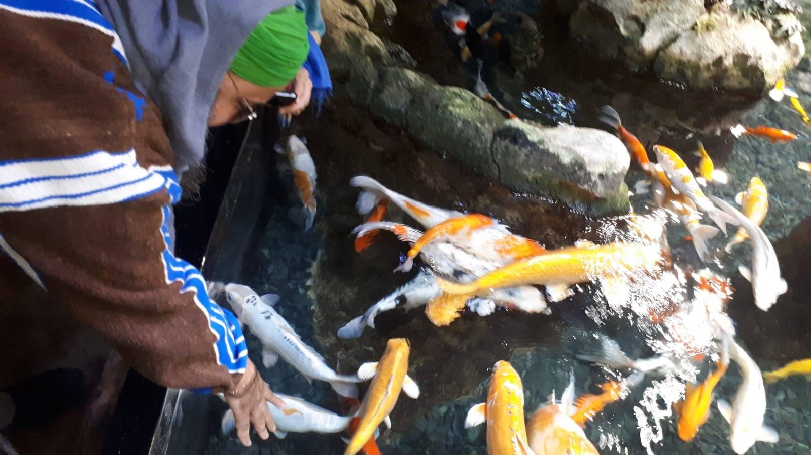 Sidi Shaykh à l'Aquarium de Paris